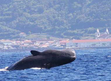Phänomen Wale & Delphine